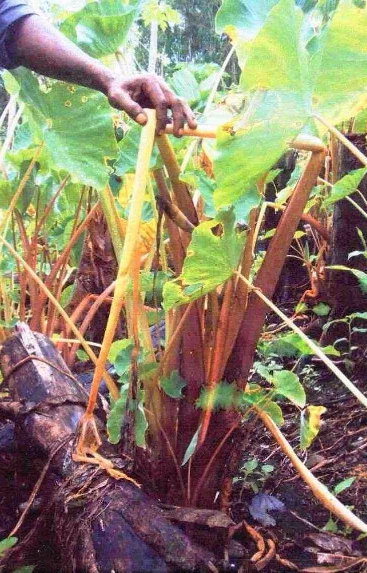 2.-Dead-Or-Discolored-Plants