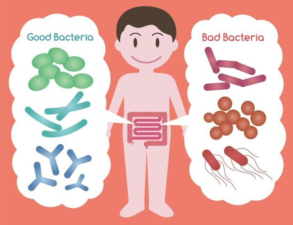 good-vs-bad-bacteria