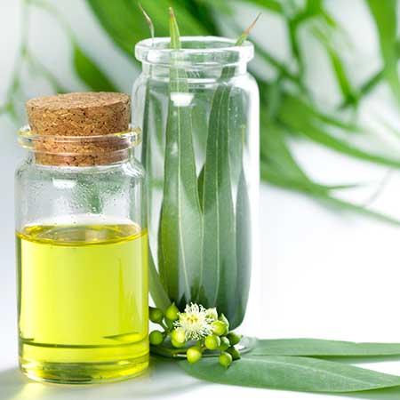 10.-Eucalyptus-Oil-