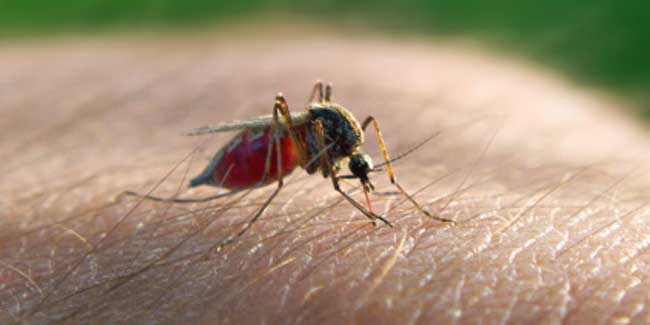 Malaria (Plasmodium Infection) Causes, Symptoms, Diagnosis & Treatment