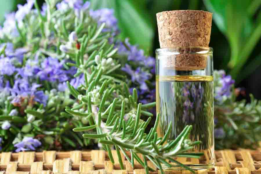 10 Incredible Health Benefits Of Rosemary Oil